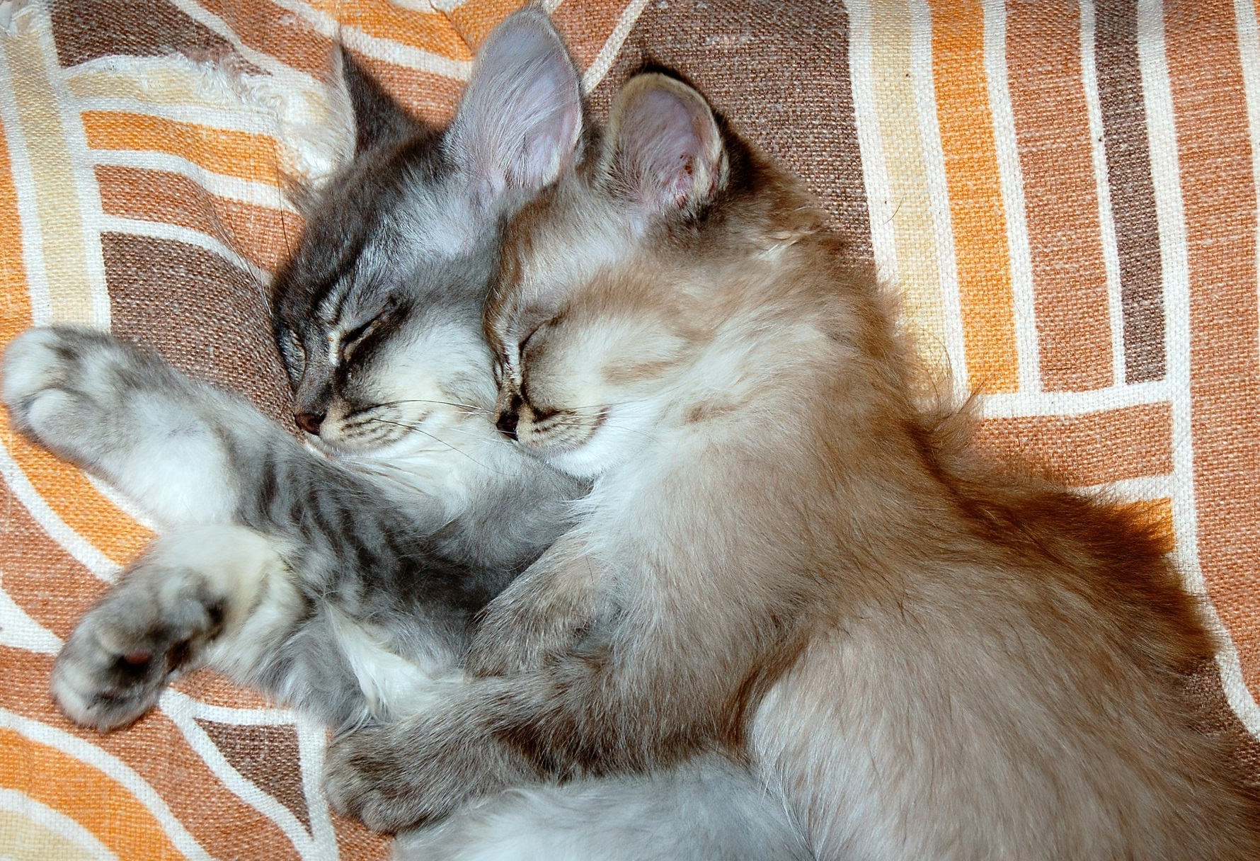 Our 15 Favorite Facts About Kittens